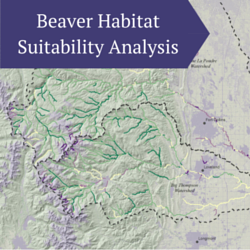 Beaver Habitat Suitability Analysis